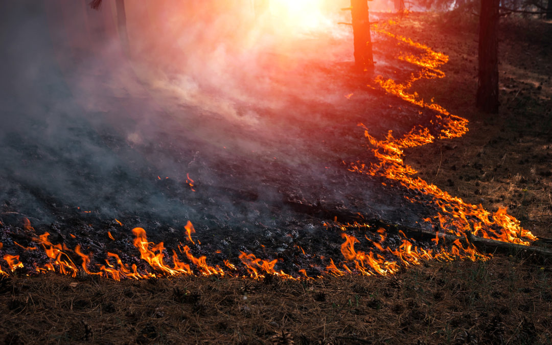 California Wild Fire Season Is Here…Are You Prepared?